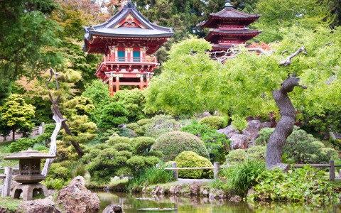 zen asian garden filled with bonsai trees and a pagoda