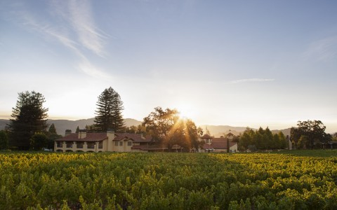 Napa valley lodge from vineyard