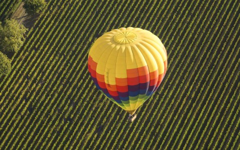 overhead view of a colorful hot air balloon flying over the vineyard