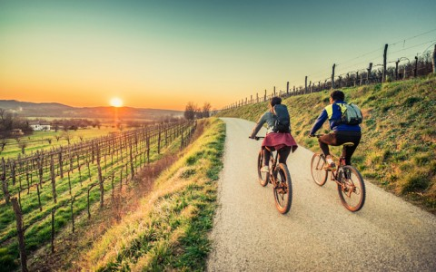 sunset bike ride in vineyard