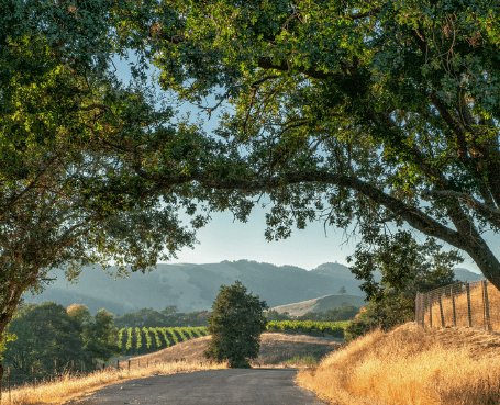 open road under a canopy of trees overlooking wine country