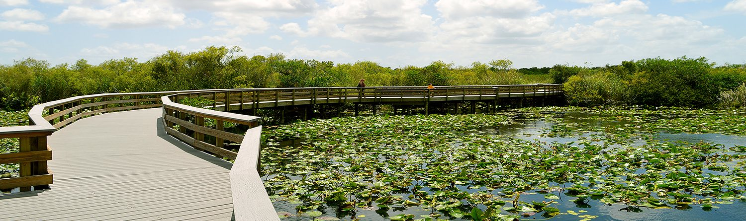 a boardwalk overtop a pond filled with lillypads