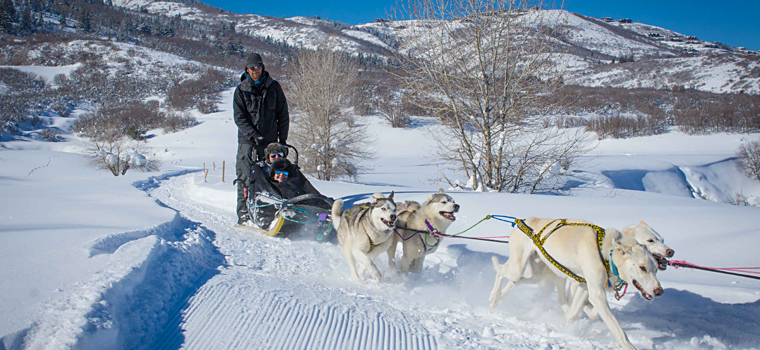 picture of a dog sled and some people