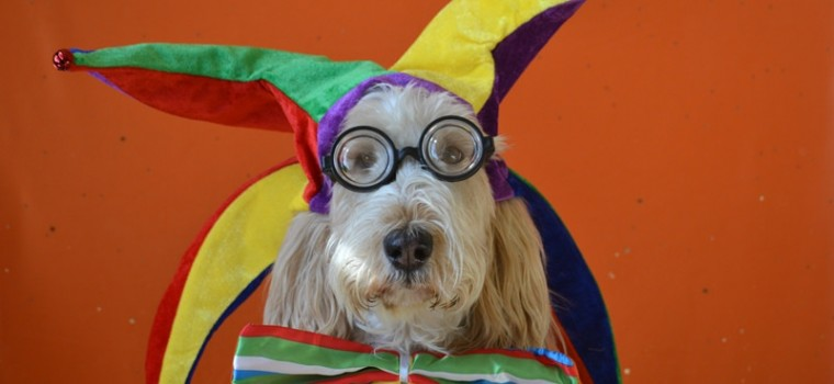 Dog with Glasses and Harlequin Cap