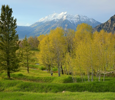 green trees with snow capped mountains in the back