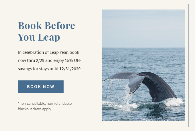 oceanedge popup leap