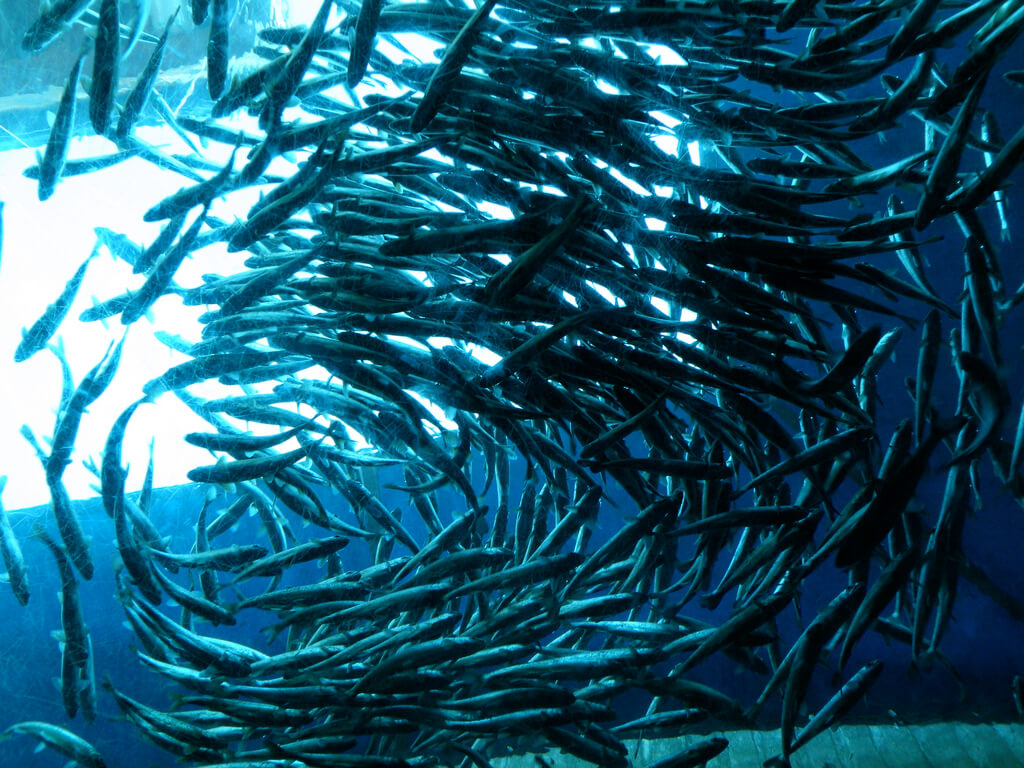 clustered fish