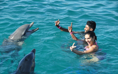 people getting along with dolphins