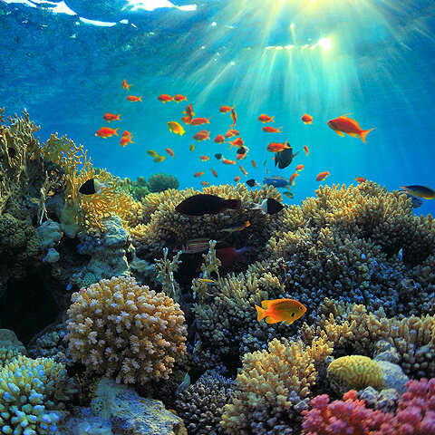 underwater view of a coral reef and fish