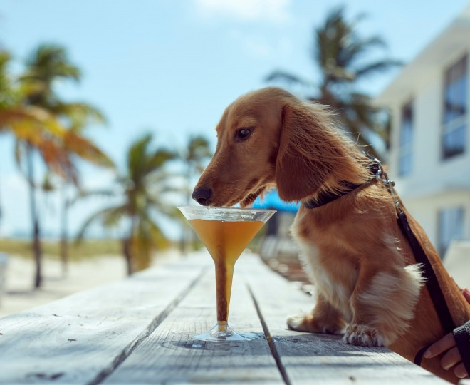 Dog sniffing drink