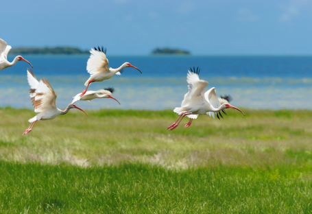 White birds flying above grass field