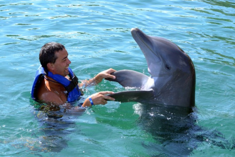 boy swimming with dolphin