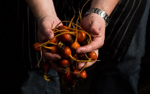 Close up of chef holding red vegetables
