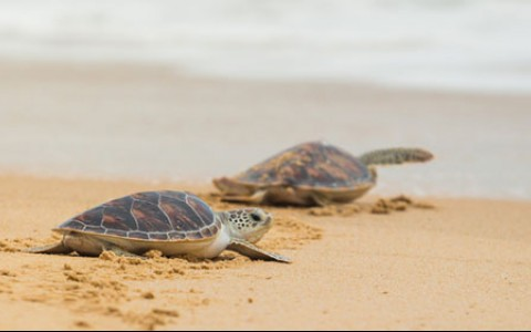 The Overwhelming Success of Our Turtle Protection Project