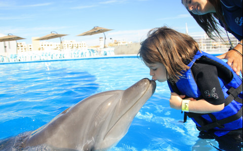 Top 5 Family Activities in Los Cabos Blog Post