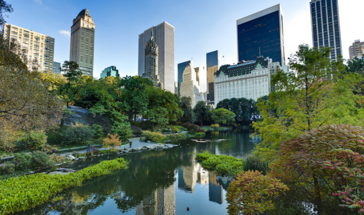 central park pond surrounded by buildings