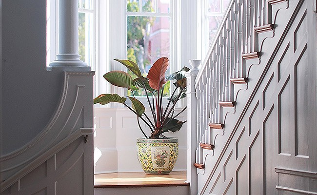 Tropical plant by window on white staircase