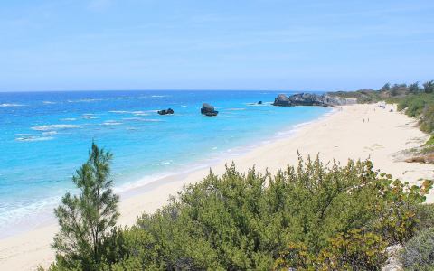 stunning beach with blue water and surrounded by greenery