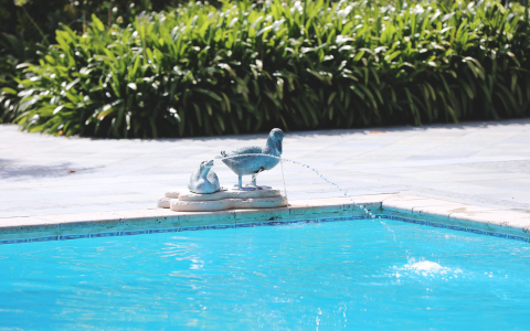 Bird standing on fountain snake by the pool