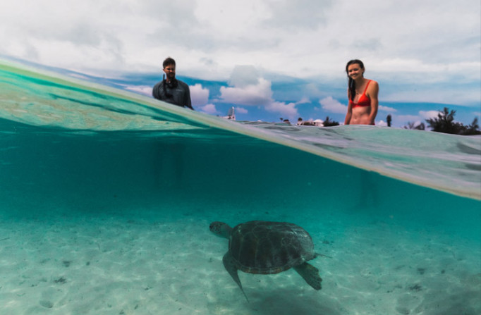 people swimming with a turtle