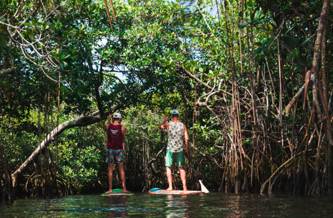 two men paddleboarding through mangroves