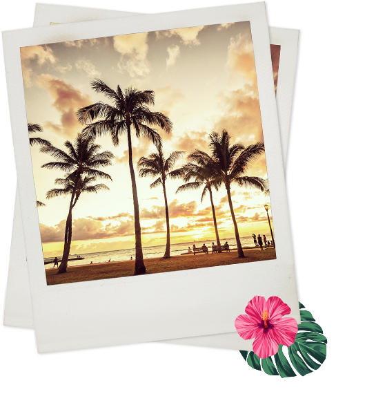 Polaroid of palm trees in sunset