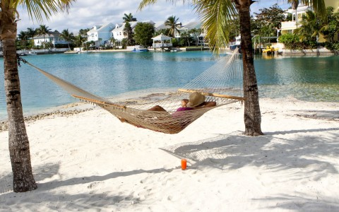hammock under palm trees