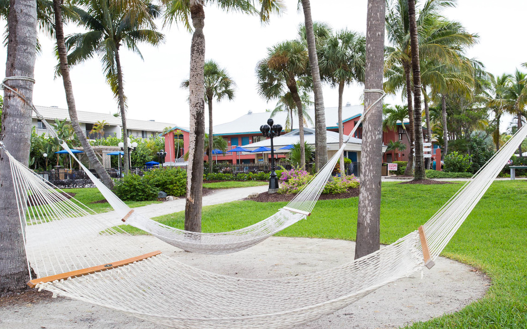 Hammocks hanging on palm trees next to property