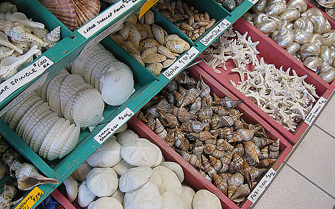Shells organized in bins at shop
