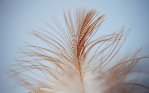 Close up of feather