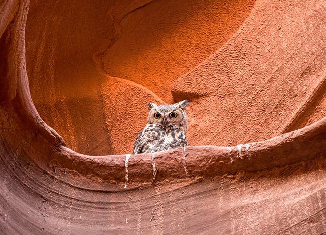 an owl on top of a rock formation