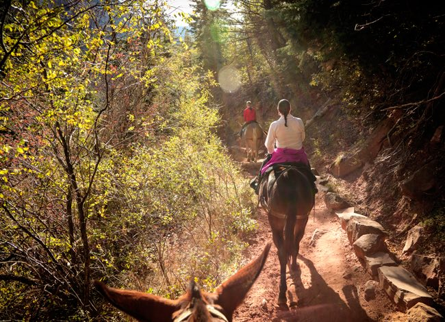 woman horseback riding on a forest trail