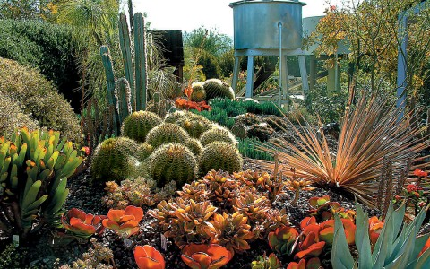 Cactus Garden with green and orange plants