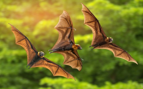 three flying bats