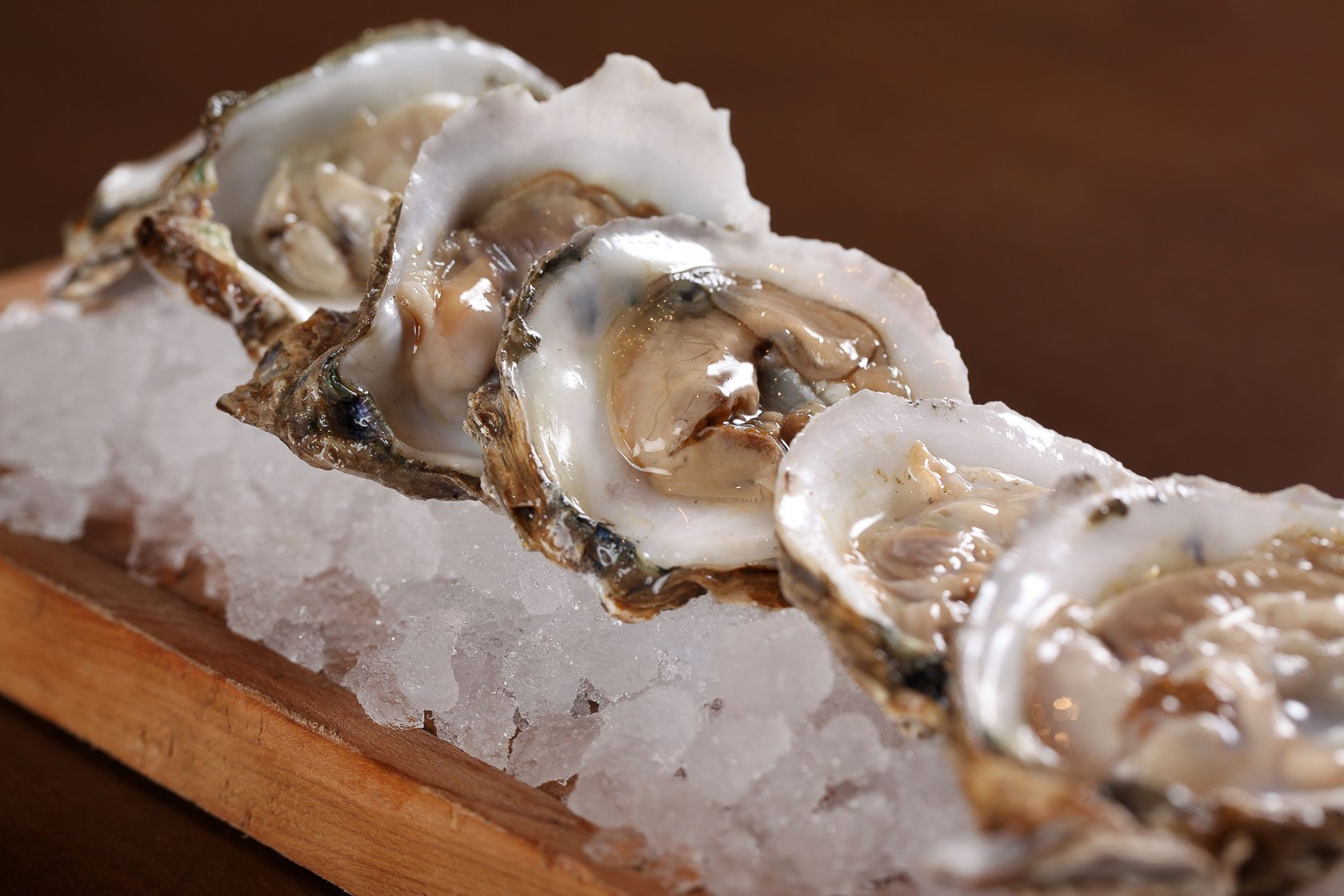 Row of oysters in ice