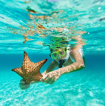 women snorkeling with starfish
