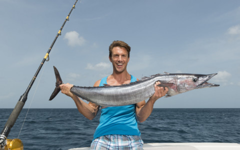 wahoo fish fresh caught