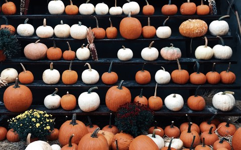 Orange and white pumpkins on the ground and arranged on a series of elevated tiers