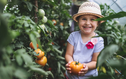 little girl holding tomato