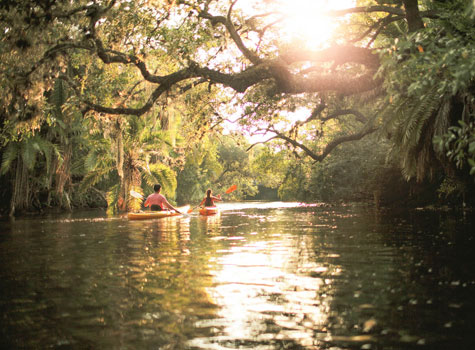 Two people kayaking through mangroves in the everglades
