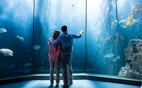 couple at the acquarium