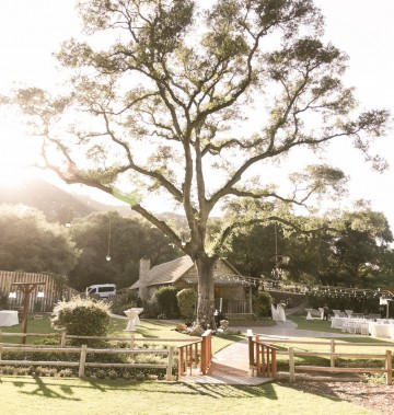 large tree in an open lawn decorated for a rustic wedding
