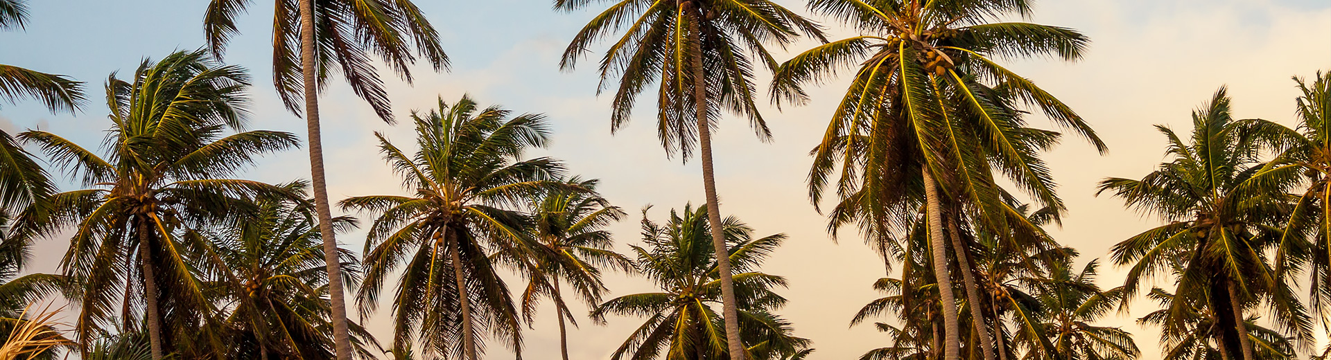 sunset palmtrees