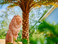 lion statue and palm tree