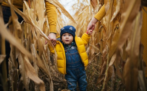 child in corn maze
