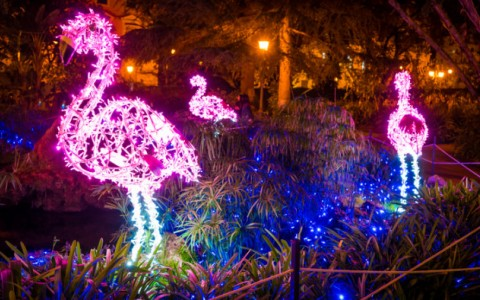 christmas light display at the zoo 5c7869bd0b699 646x394