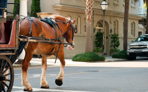 a horse walking down the street pulling a carriage