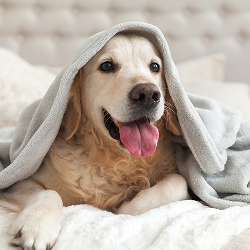 a dog laying on a bed with a blanket over its head