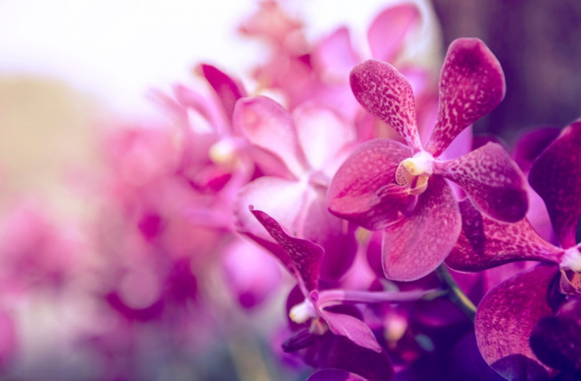 select focus of purple orchids