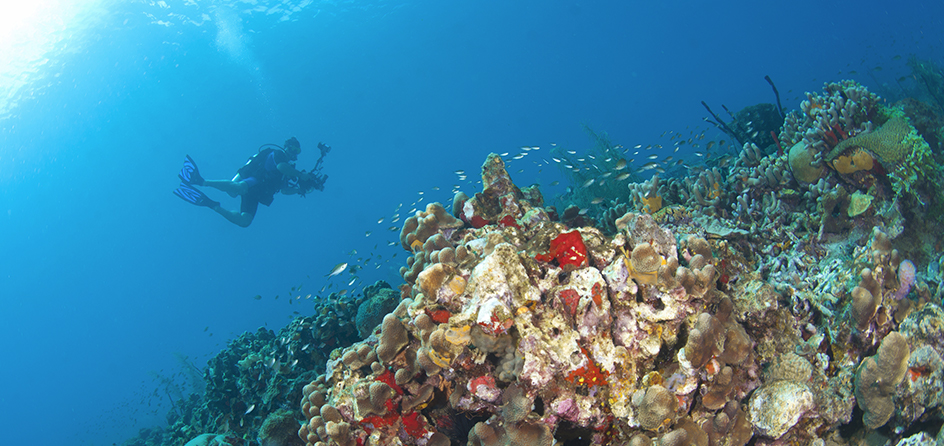 person scuba diving over a coral reef